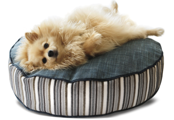 Beautiful Dog Bed Medium Luxury Stripe Teal – Julie London