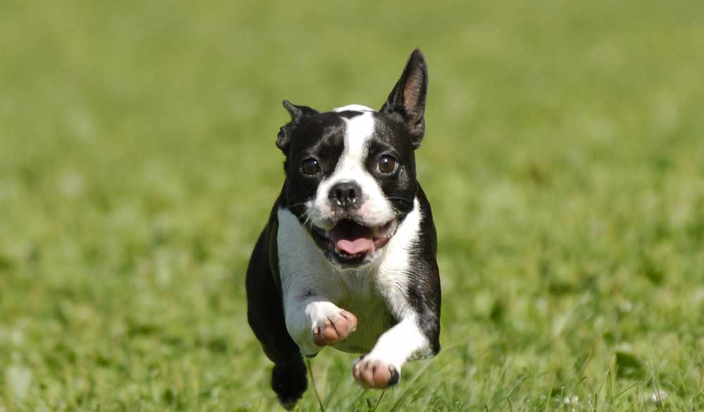 Our Top 10 Small Dog Breeds