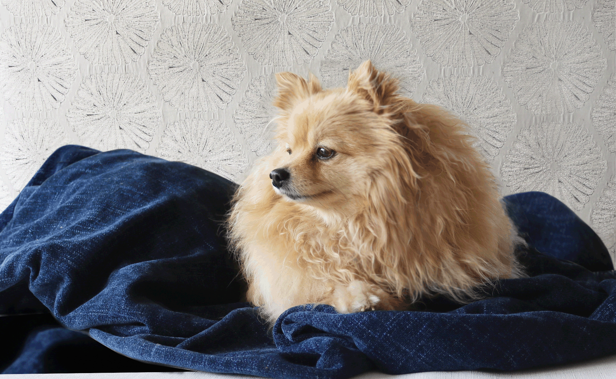 Luxury dog blanket - Julie London Design