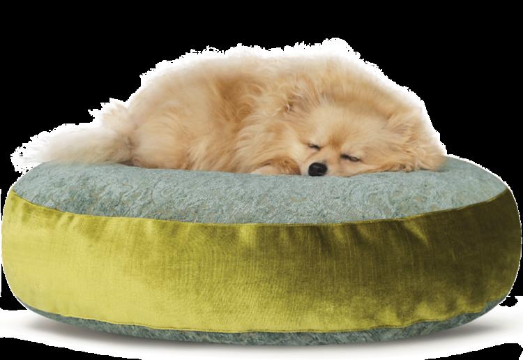 Luxury Velvet Dog Bed Large Teal Lime hero - Julie London